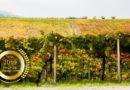 Azienda Vinicola Petrini Newest Winery open in Abruzzo