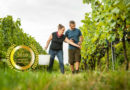 Weingut Feiler-Artinger : Highest Quality Austrian Wines