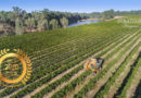 Trifon Estate Wines : Combine Traditional Method and Modern Technology, the Taste of Purity