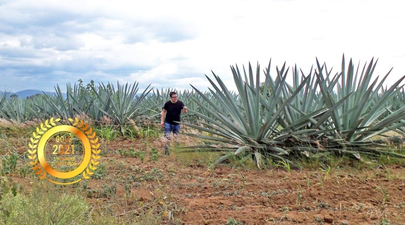 Casa Arcaute S.A. de C.V. : Mezcals are made with 100% Agave Espadin (Angustifolia Haw)
