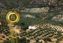 X 37 grados norte S.L. : Produce High Quality Premium Olive Oil