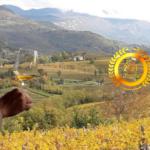 Società Agricola DRAGA di Miklus Mitja & C. s.s. : Passion in Winemaking, Produce Excellence Wines
