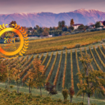 MASOTTINA : Highest Quality Wines, Authentic Territory